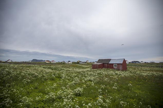 Slåttmark